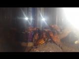 Жуля против Мадагаскарского таракана!,