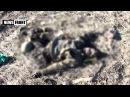 18 Ужас Дебальцево оставшиеся в котле каратели валяются в поле уже месяц. 25 февр ...