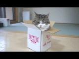 Видео: Очень смешные коты // funny cats 2017