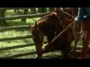 The Horse Whisperer- Secrets