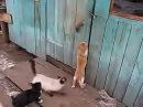 Кошки сами открывают дверь!