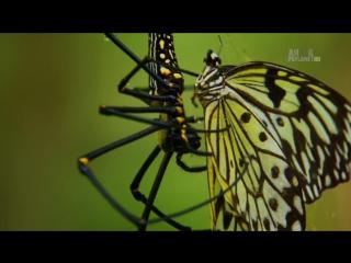 Неизведанные острова 2-й сезон 4-я серия. Филиппины - Таинственные острова / Wildest Islands (2013) HD 720p