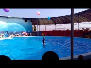 дельфины и люди))