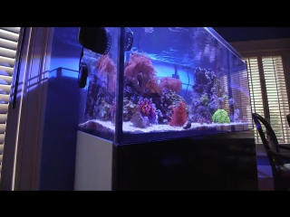 Морской Рифовый Аквариум - Пенник, Флотатор, Скиммер