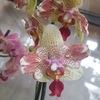 Орхидеи22