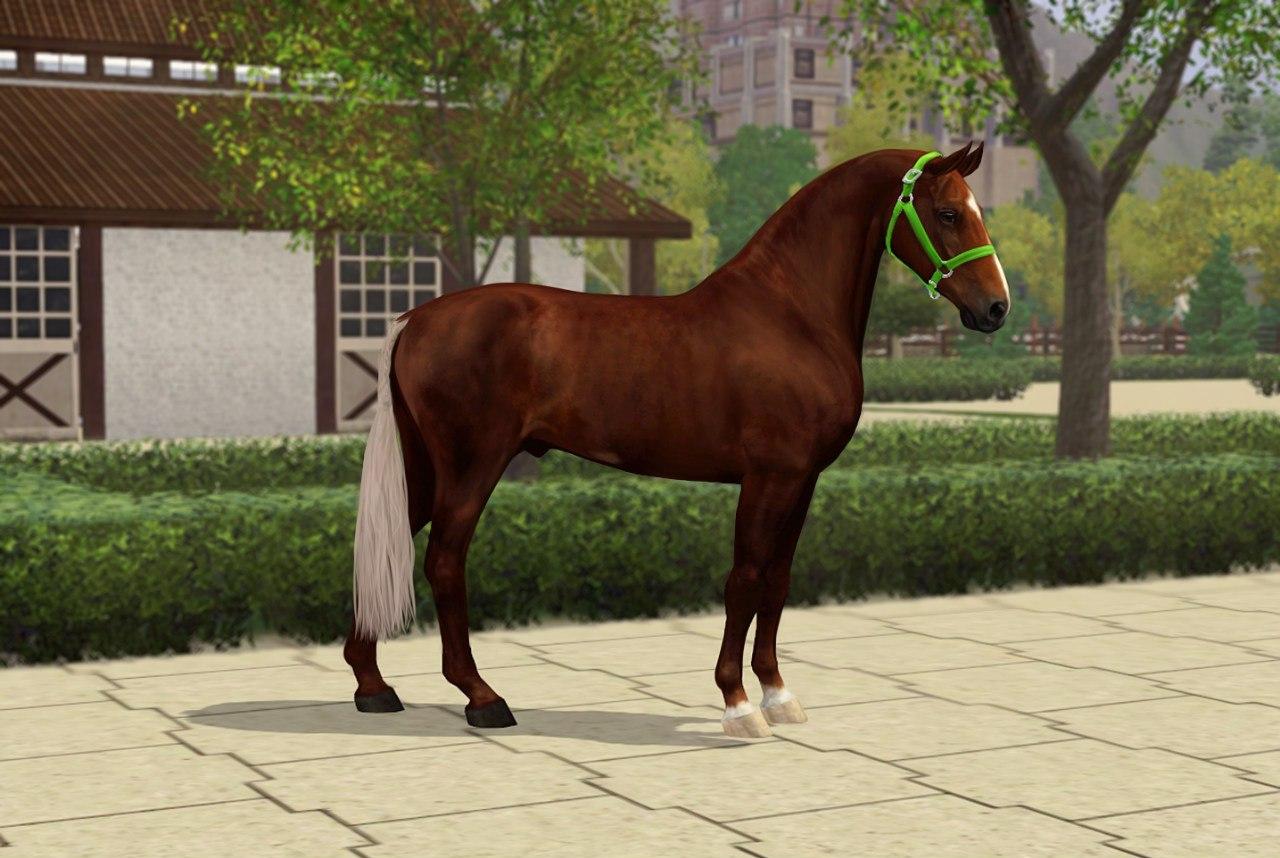 Регистрация лошадей в RHF 2 GQkaSB2SQ2Q