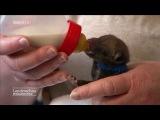 Aus dem Gulli gerettet Fuchswelpen mit tierischem Babysitter