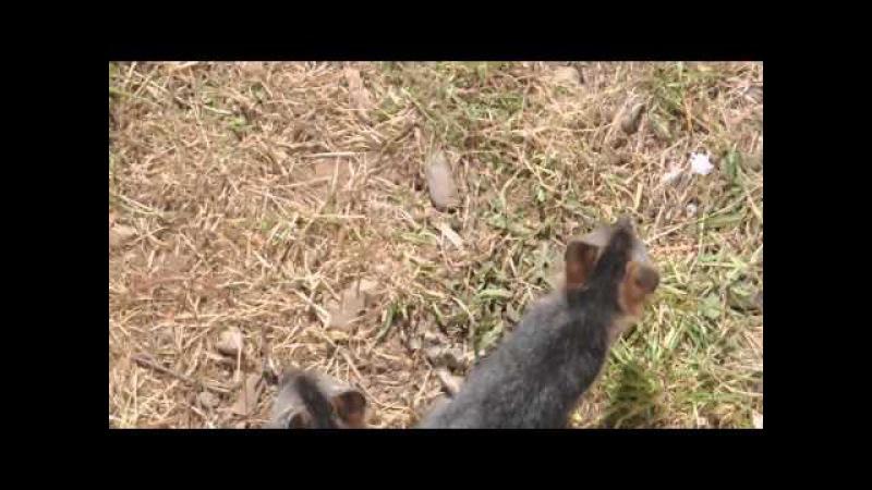 Fox Kits born at Jug Handle Creek Farm