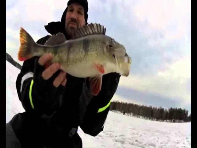 Ловля огромных окуней зимой. Трудно поверить в происходящее / Winter fishing. Perch