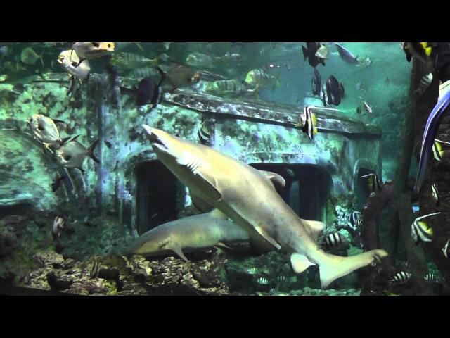 Воронежский океанариум - Кормление акул Voronezh Aquarium - shark feeding