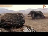 Тайны Чапман - Камень - Бог / 15.06.2016