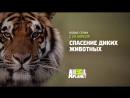 Спасение диких животных