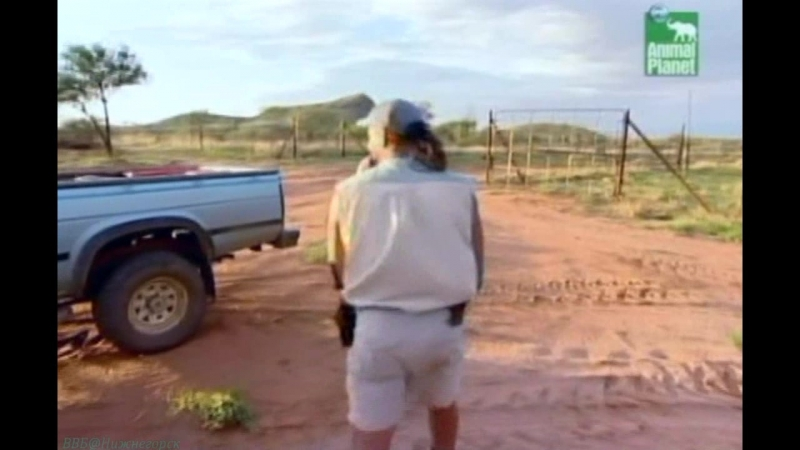BBC «Заповедник в дебрях Африки» (11 серия) (Реальное ТВ, животные, 2005)