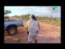 BBC Заповедник в дебрях Африки 11 серия Реальное ТВ животные 2005