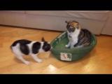 Кот занял не свое место [720p]