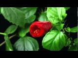 Поль Мориа. Токката. Цветы любви.