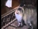 NONONONO Cat no no no о ноу ноу ноу D прикол Бешеный напуганый кот