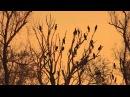 Cormorants in Pamvotis Lake ( music: Shigeru Umebayashi )
