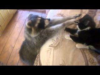 Jay Vill - кот и енот