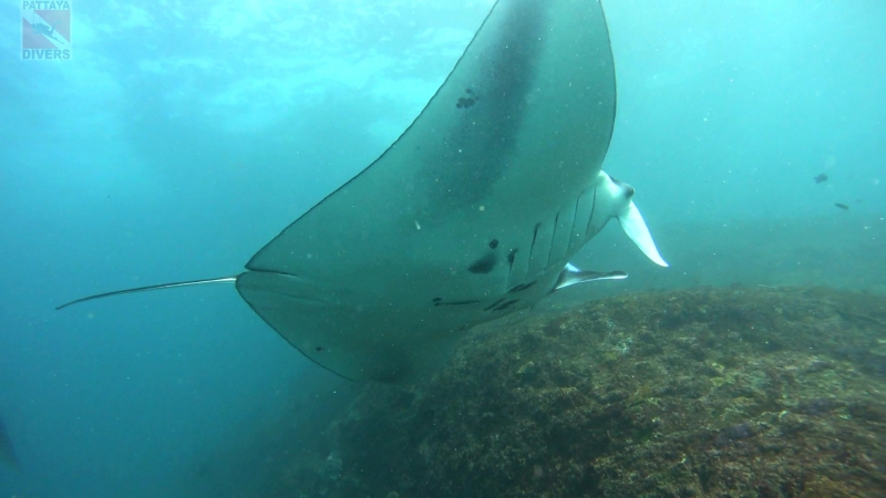 Пять морских дьяволов на Manta Point | Дайвинг на Бали