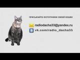 Главная Кошка Владимирской области (Радио Дача)