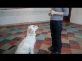 Обучение лизанию палки))