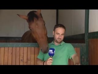 Как Дать интервью рядом с лошадью? - Никак! Смотрите это смешно!