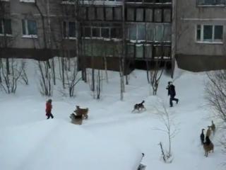 Подъеблаш №4-Собаки Павлова кидаются на людей