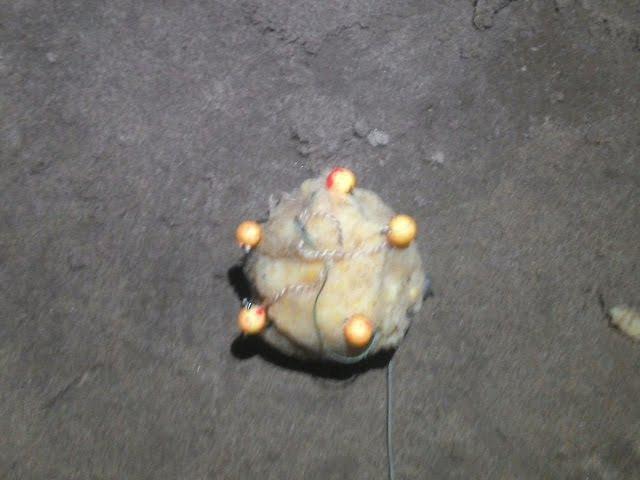 ловля сазана толстолобика в приморье