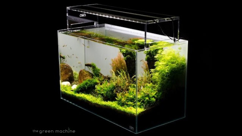 Aquascape Tutorial Guide by James Findley The Green Machine- Sticks Stones