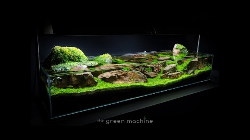Aquascape Tutorial Guide: 'Continuity' by James Findley The Green Machine