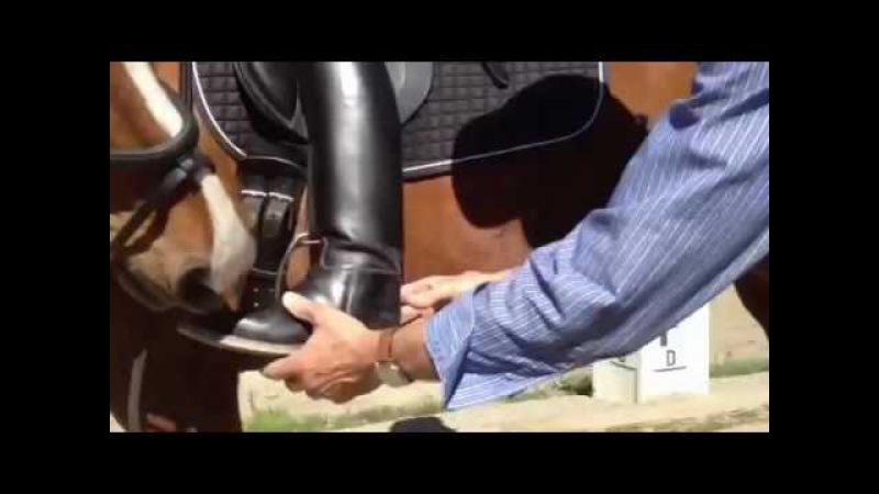 Правильное воздействие ноги для подъема спины лошади