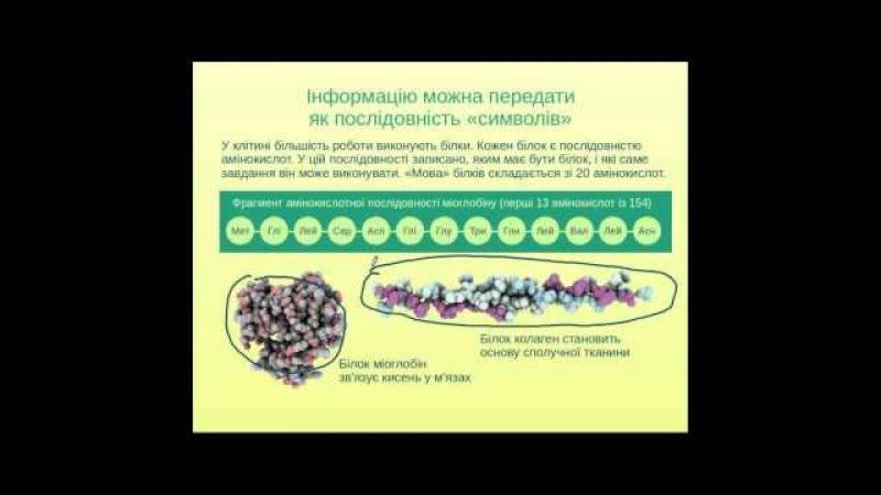 Задачі ЗНО з молекулярної біології (частина 1)