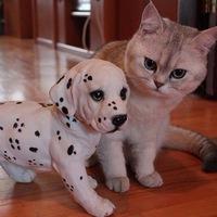 Без собаки и кота жизнь не та