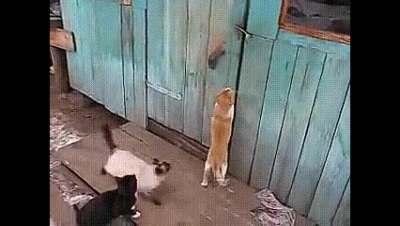 Организованная преступность ))