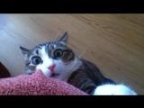 Коты в шоке