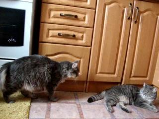 Лиса нападает на Лапушку