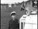 Training RAF Police Dogs (1950)