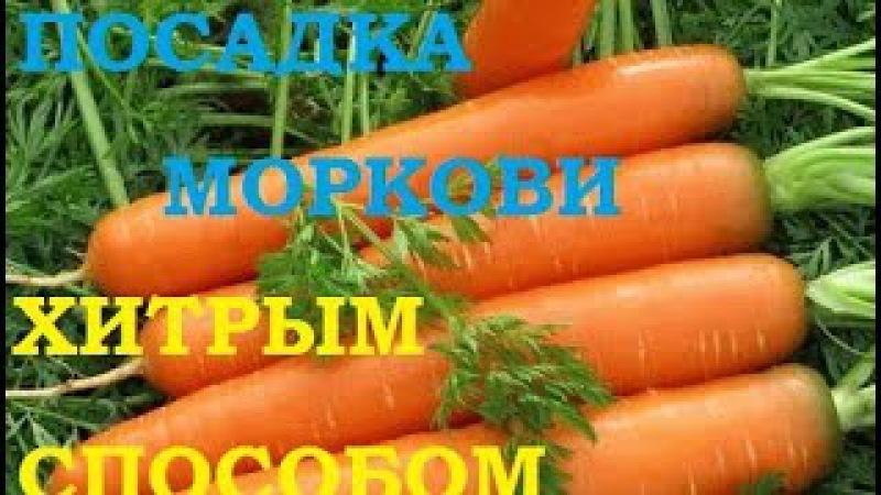 Посадка моркови хитрым способом Ждем всходы через несколько дней