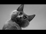 Смешные Видео Про Котов и Кошек ★ Приколы Про Животных Самые Смешные До Слез