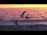 From Sunrise to Sunset A Time-Lapse Slow Motion Compilation of a Day at the Ocean