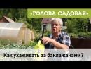 Голова садовая Уход за баклажанами супер раствор против грибка