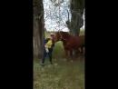 Мы с конем вдвоём по полю пойдём...