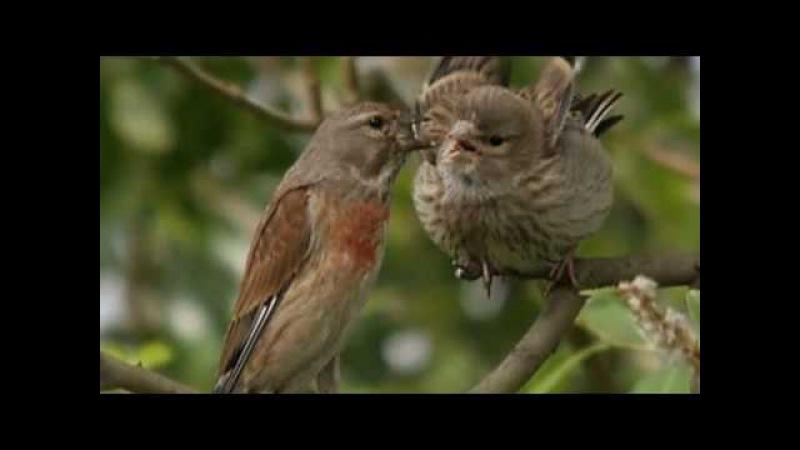 Доброе утро под пение птиц