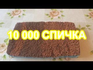 10 000 СПИЧКА ӨРТЕУ / Қазақша эксперимент.