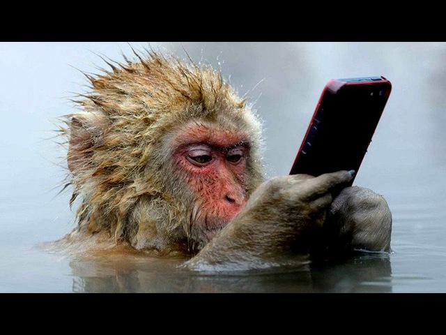 Обезьяны УМНЕЕ людей - невероятные способности обезьян. Умные обезьяны, докумен ...