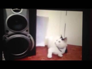 Коты ПЕРДУНЫ БЕШЕНЫЕ РЫГАЮЩИЕ КОТЫ И ПУКАЮЩИЕ КОТЫ