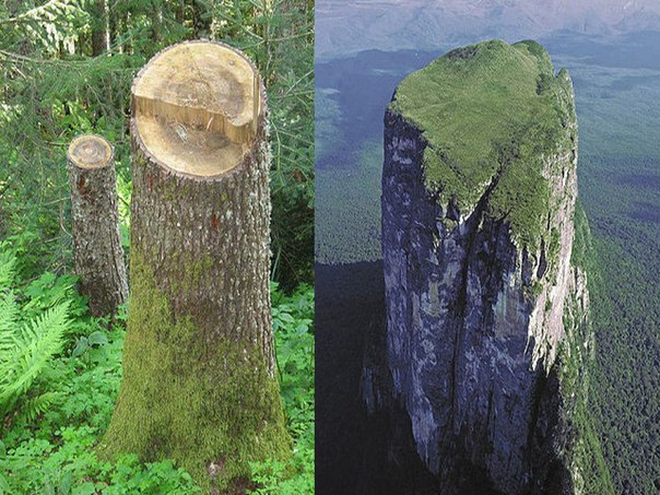 На Земле лесов нет! — часть 1
