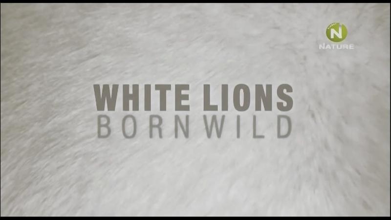 Дикие белые львицы 2 серия Борьба за выживание / White Lions - Born Wild / 2012
