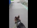 к ветеринару